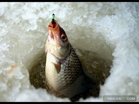 На рыбалке. Зимняя ловля плотвы на Куршском заливе