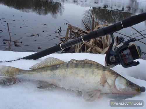 Зимний спиннинг на озере Трофейное