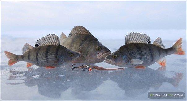 Озеро Алабуга. Ловля окуня