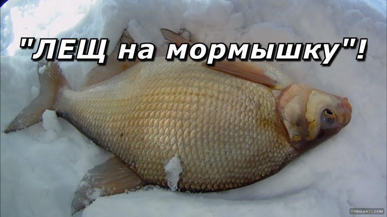 Павел Балушкин. Лещ на мормышку
