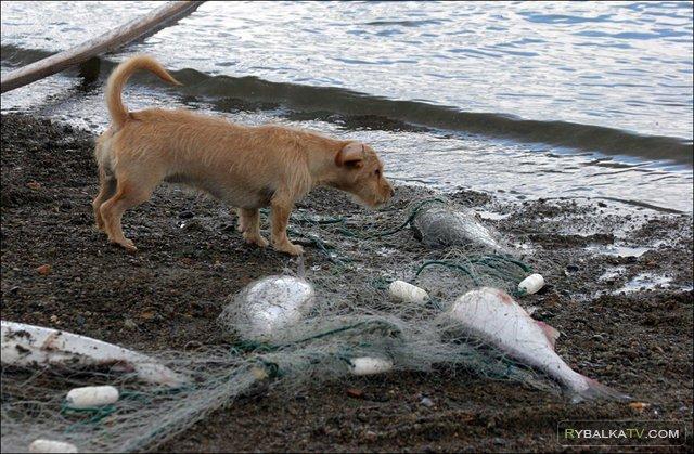 Рыболовные путешествия. Чукотка