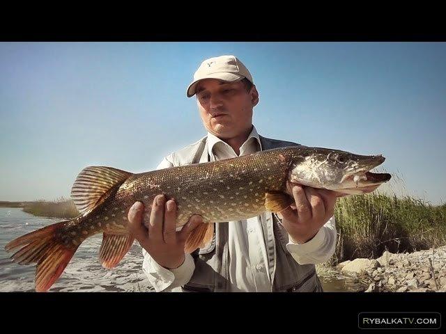форум рыбаков самара рыбалка в казахстане