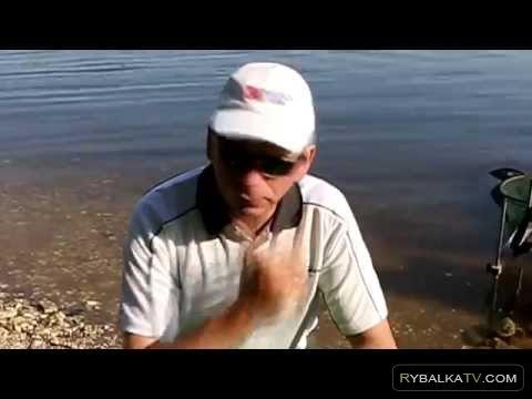 В чем особенности рыбалки на большой реке болонской снастью