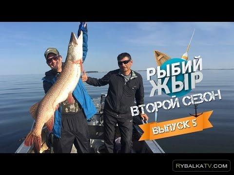 Рыбий жир. Рыбалка на Алтае 2015. Ловля трофейной щуки