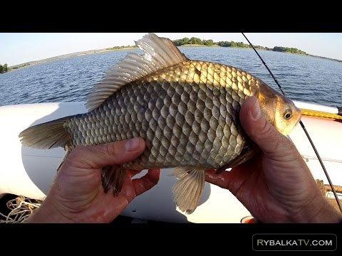 Рыбак Рыбаку. Карась на болтушку