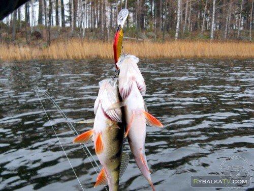 Регулярная рыбалка. Судаки, окуни и щуки