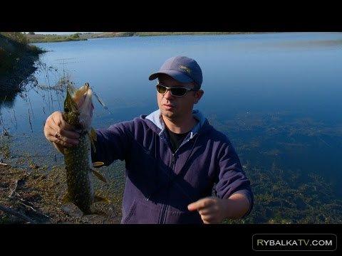 Рыбак рыбаку. Ловля щуки и окуня в октябре