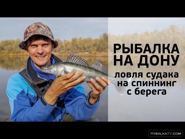 Рыбалка на Дону. Ловля судака на спиннинг с берега